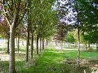 XXL-Bäume Baumschule Steger